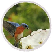 Bluebird Landing On Orchid Round Beach Towel