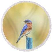 Bluebird On Blue Stick Round Beach Towel by Robert Frederick
