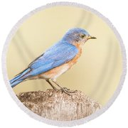 Round Beach Towel featuring the photograph Bluebird On Fence Post by Robert Frederick