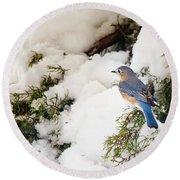 Bluebird On Snow-laden Cedar Round Beach Towel by Robert Frederick