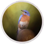 Bluebird On The Nest Pole Round Beach Towel