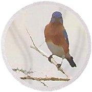 Bluebird Stare  Round Beach Towel