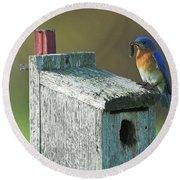 Round Beach Towel featuring the photograph Bluebird by Steve Stuller