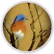 Bluebird Waiting For Spring Round Beach Towel