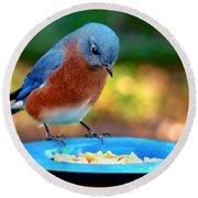 Bluebird's Dinner Round Beach Towel