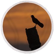 Boat-tailed Grackle At Sunset Round Beach Towel