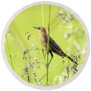 Boat-tailed Grackle Female Round Beach Towel