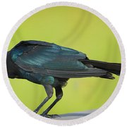Boat-tailed Grackle Male Round Beach Towel