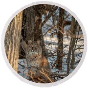 Round Beach Towel featuring the photograph Bobcat by Brenda Jacobs