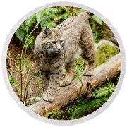 Bobcat In Forest Round Beach Towel by Teri Virbickis