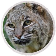 Bobcat In The Trees Round Beach Towel