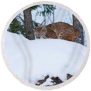 Bobcat On Snow Hill Round Beach Towel by Steve McKinzie
