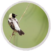 Bobolink Looking At You Round Beach Towel