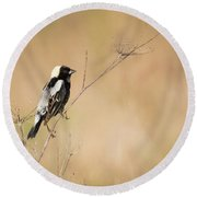 Round Beach Towel featuring the photograph Bobolink  by Ricky L Jones