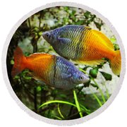 Boeseman's Rainbowfish Round Beach Towel