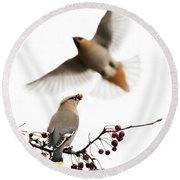 Round Beach Towel featuring the photograph Bohemian Waxwings by Mircea Costina Photography