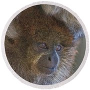 Bolivian Grey Titi Monkey Round Beach Towel