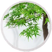 Bonsai Acer Tree Round Beach Towel