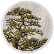 Bonsai Tree Round Beach Towel