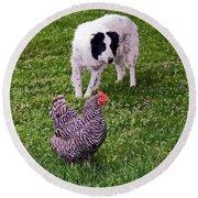 Border Collie Herding Chicken Round Beach Towel