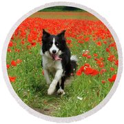 Border Collie In Poppy Field Round Beach Towel