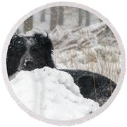 Border Collie In Snow Round Beach Towel
