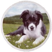Border Collie Puppy Painting Round Beach Towel