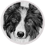 Border Collie Stare Round Beach Towel