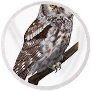 Boreal Owl Tengmalm's Owl Aegolius Funereus - Nyctale De Tengmalm - Paerluggla - Nationalpark Eifel Round Beach Towel