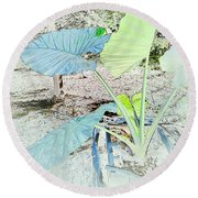 Round Beach Towel featuring the photograph Borneo Giant Abstract by Robert G Kernodle
