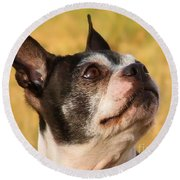 Round Beach Towel featuring the photograph Boston Terrier Portrait by Debbie Stahre