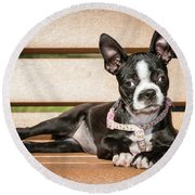 Boston Terrier Puppy Relaxing Round Beach Towel