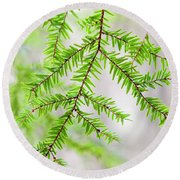 Round Beach Towel featuring the photograph Botanical Abstract by Christina Rollo