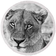 Botswana  Lioness In Black And White Round Beach Towel