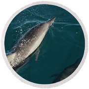 Bottle Nose Dolphin Round Beach Towel