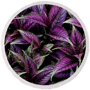 Bouquet Of Persian Shield Round Beach Towel