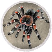 Brachypelma Smithi  Mexican Red Knee Tarantula Round Beach Towel
