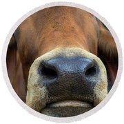 Brahman Cattle Closeup Portrait Round Beach Towel
