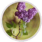 Branch Of Fresh Violet Lilac Round Beach Towel