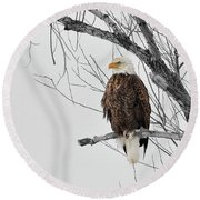 Branch With A View Round Beach Towel by Steve McKinzie