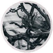 Branches Series 9150697 Round Beach Towel