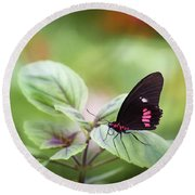 Round Beach Towel featuring the photograph Brave Butterfly  by Cindy Lark Hartman