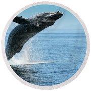 Breaching Humpback Whale Round Beach Towel