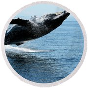 Breaching Humpback Whales Happy-2 Round Beach Towel