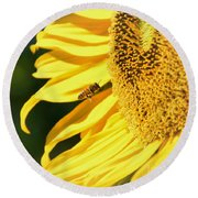 Round Beach Towel featuring the photograph Breakfast Bee by Angela J Wright