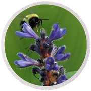 Round Beach Towel featuring the photograph Bumble Bee Breakfast by Glenn Gordon