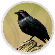 Brewers Blackbird Resting On Log Round Beach Towel