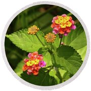 Bright Cluster Of Lantana Flowers Round Beach Towel