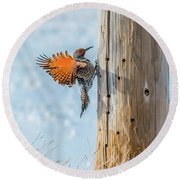 Brilliant Northern Flicker Woodpecker Round Beach Towel by Yeates Photography