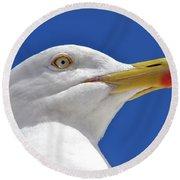 Round Beach Towel featuring the photograph British Herring Gull by Terri Waters